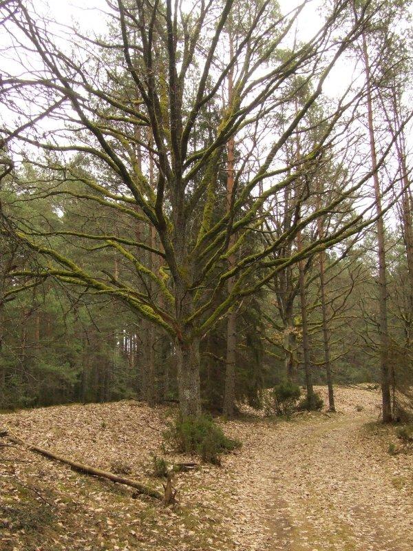 Drzewko na trasie rowerowej