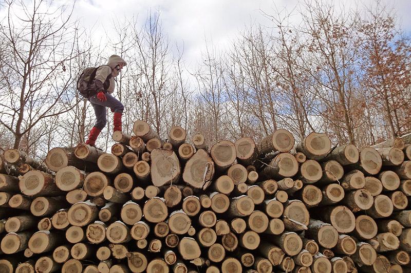Pogromczyni Drewnianego Szlaku