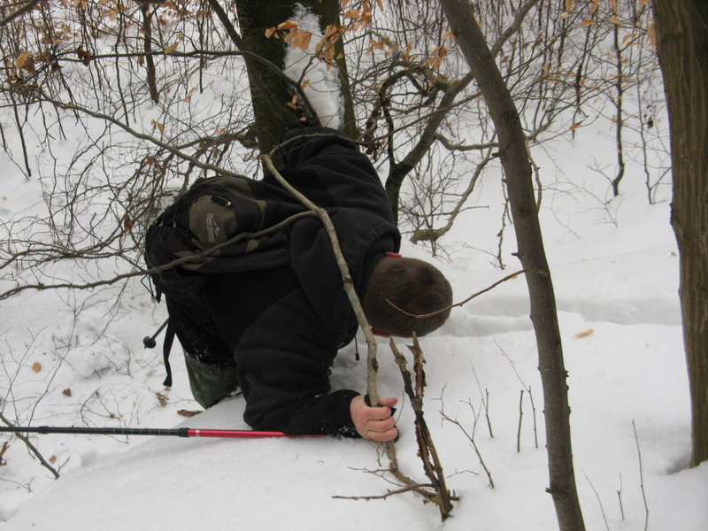 w śnieznym krajobrazie łatwiej dostrzec dzikie bobry
