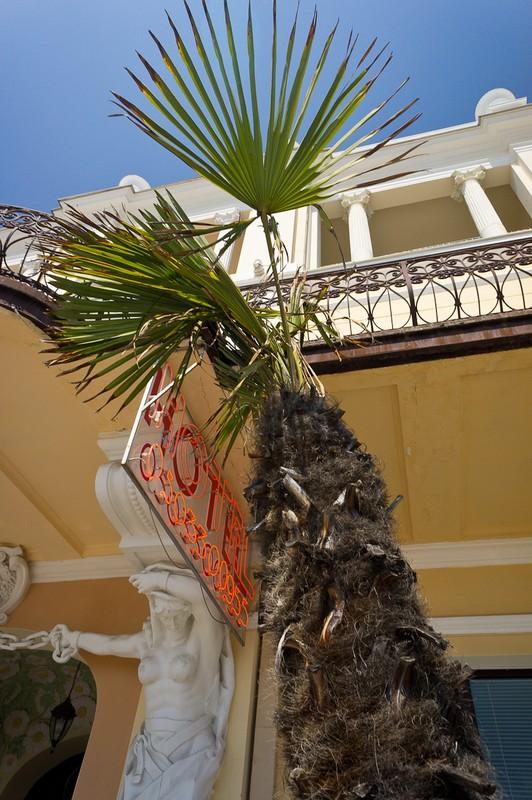 prawdziwa palma!!