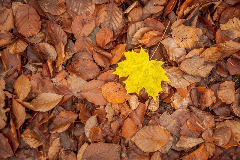 Do zobaczenia kolejnej jesieni ;)