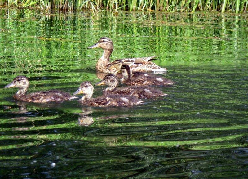 Rodzinny spływ