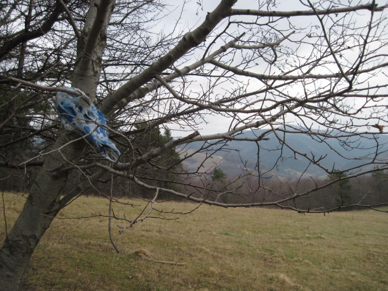 Inne drzewko