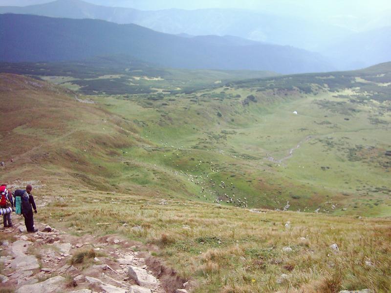 owce w gorach