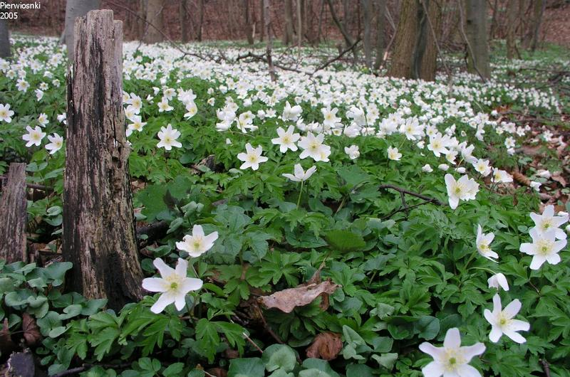 Wiosenna sielanka
