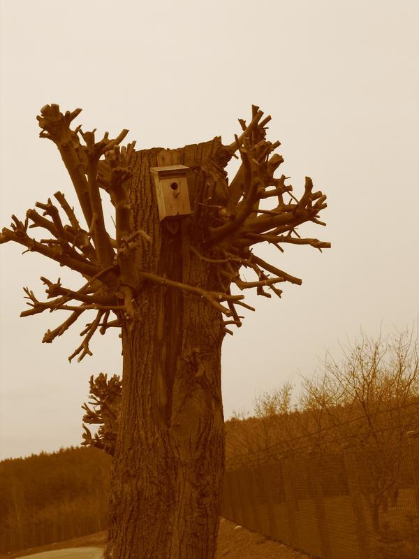 'O czym szumią drzewa, lepiej jest nie wiedzieć...'