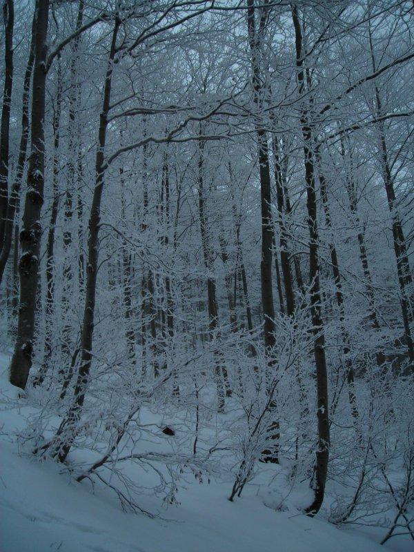 krajobraz zimowy 2