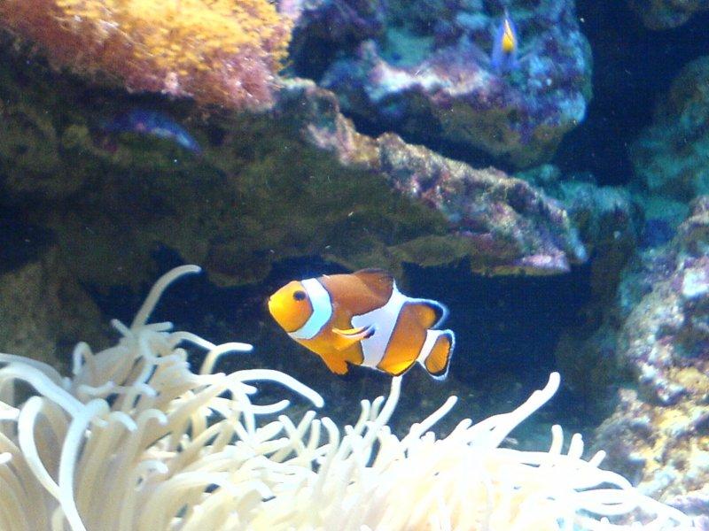 Nemo się znalazł