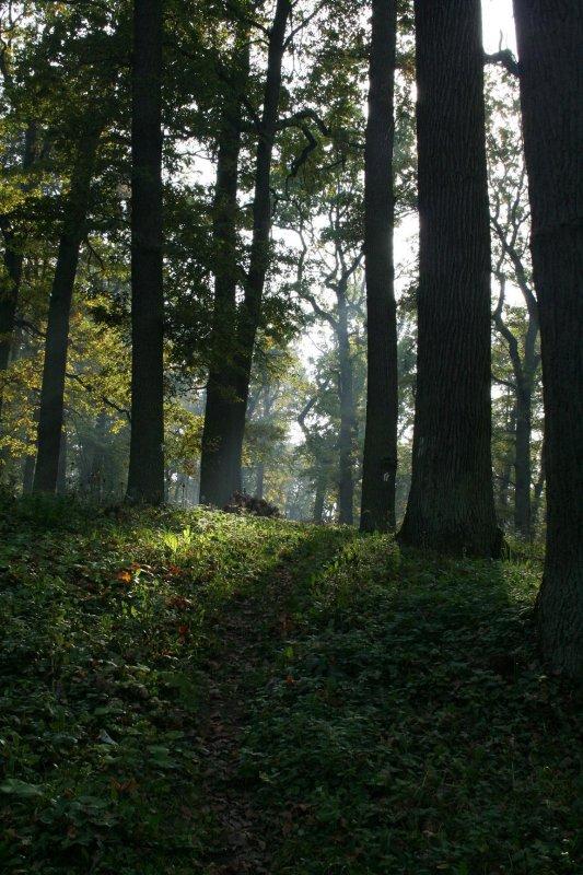 w koncu jakis las...