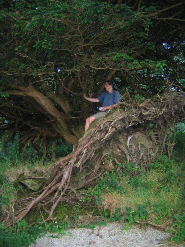 To nieprawda,że to drzewo się wywróciło dlatego, że na nim usiadłam. Ono już takie było wcześniej!