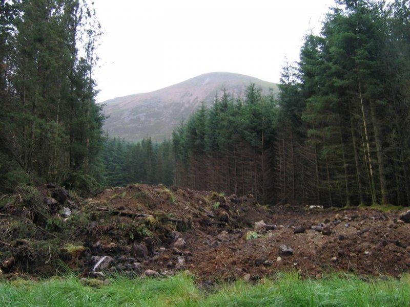 Szkocki las - przecinki mają niezłe