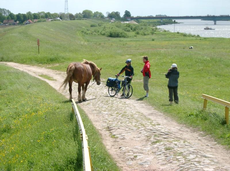 Koń jaki jest kazdy widzi