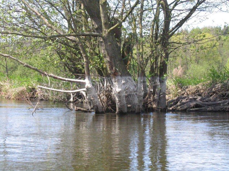 Woda już powoli opada ( po styczniowym wylaniu )
