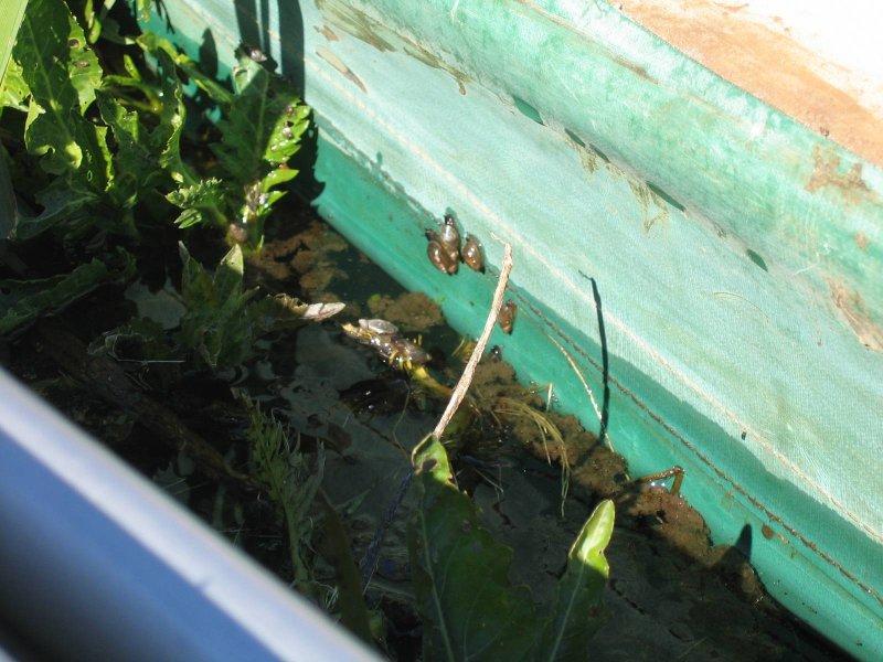 Czekamy i czekamy , a ślimaki atakują