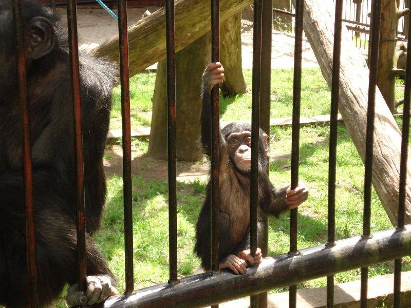 wyjątkowa mała małpeczka :-)