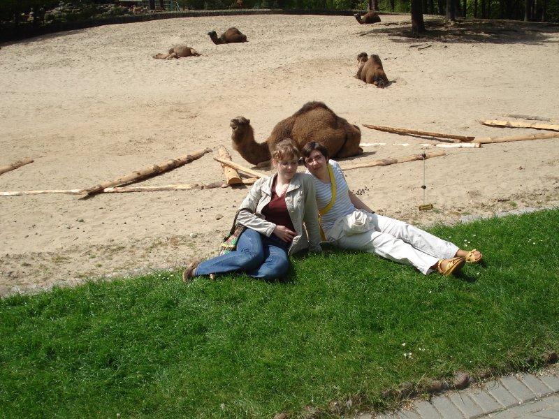 Agata, Monika i wielbłądek