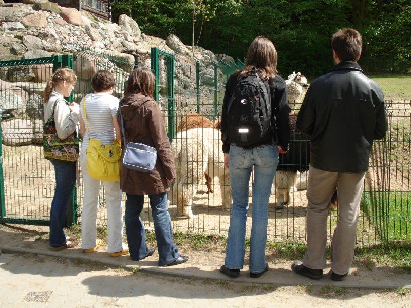 grupa zwiedzająca podziwiajaca kichające zwierzęta