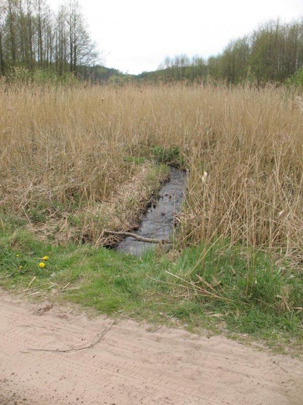 Kto nazwał tę rzekę Bukowiną ? Powinno być Trzcianka :)