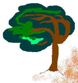 drzewko nad morzem ;)