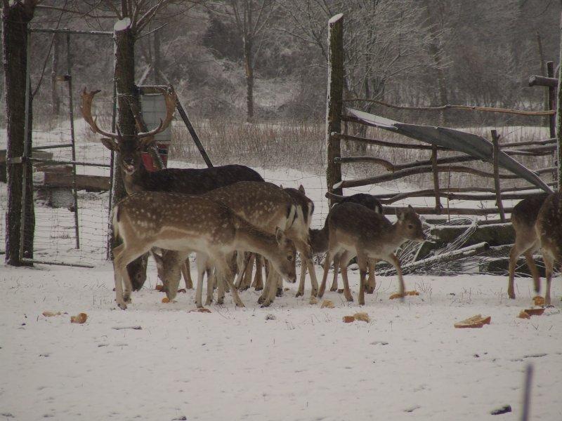Farma jeleni