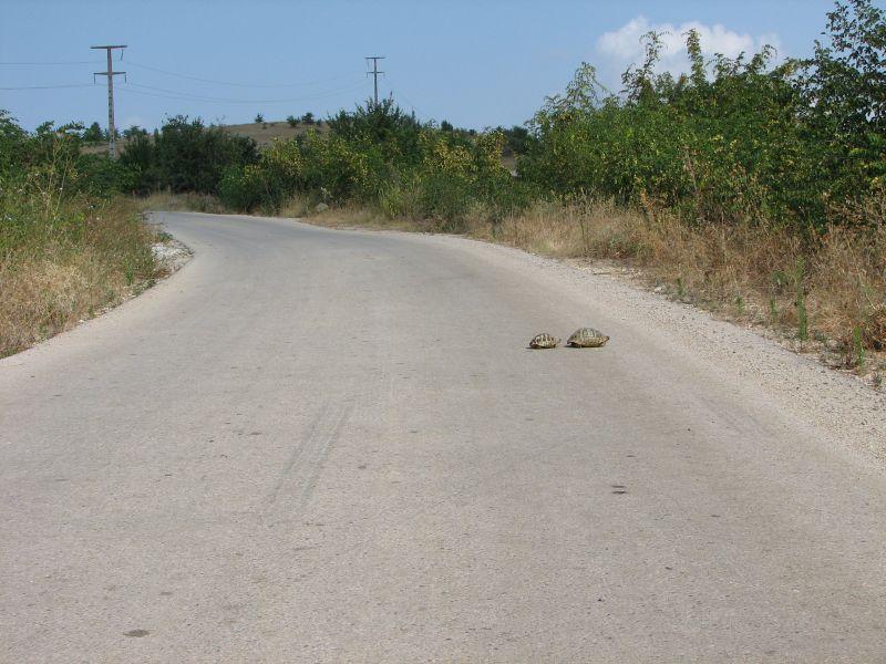 Uwaga żółwie!