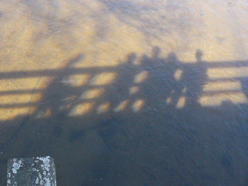 fifole na moście