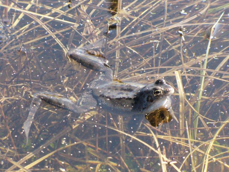 zrelaksowana żaba :)