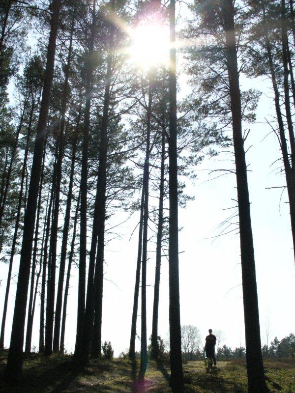 pośród drzew