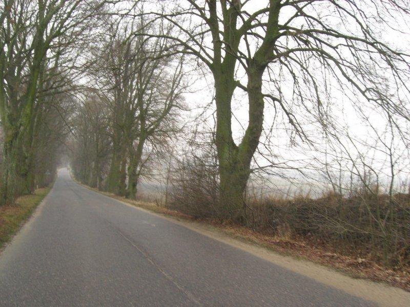 Dużo mokrego asfaltu, mgły i drzew