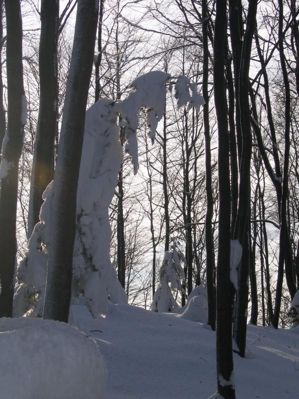 Wiedźma śnieżna